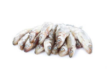 Fresh raw sea fish on white background