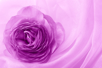 flower petal on soft satin