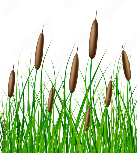 Vector reed with grass