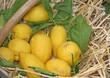 juicy yellow lemons on sale in a wicker basket