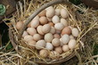 old wicker basket with eggs laid on a soft straw from farmer