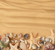 sea shells and sand. Background