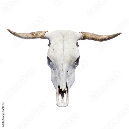 Tuinposter Koe bull skull - top view, isolated