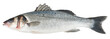 Fresh Sea Bass fish isolated