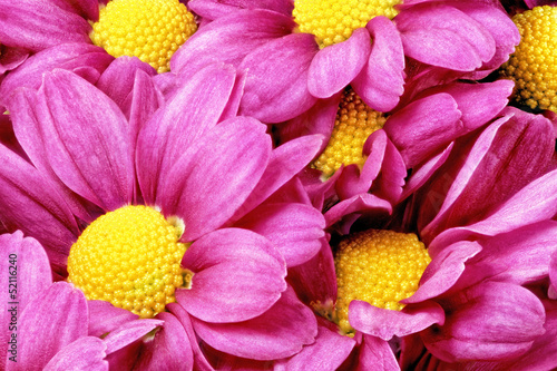 Deurstickers Macro Beautiful violet red dahlia flowers.Сloseup