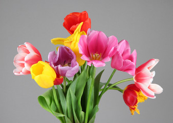 Beautiful tulips in bouquet on gray background