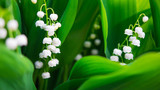 Blooming Lily-of-the-valley