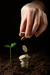 Hands with plant and money