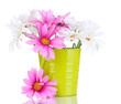 Beautiful daisies in colorful bucket isolated on white