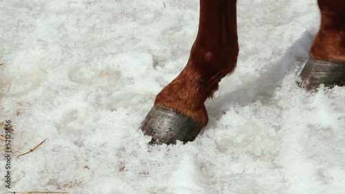 close-up of a horse's hoof in the snow