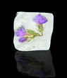 Ice cube with flowers, isolated on black