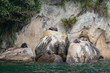 basking fur seals in Abel Tasman National Park