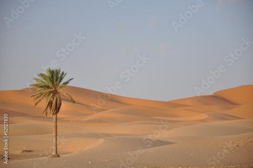 Fototapeten,menschenleer,sand,palm tree,sanddünen