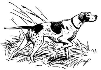 Pointing dog at hunting