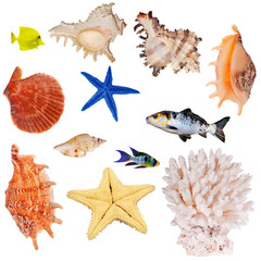 collection of isolated invertebrates and fishes