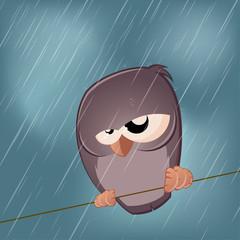 regen vogel wetter