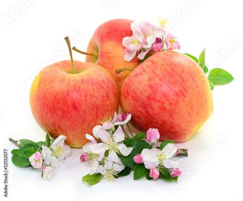 Fototapeten,äpfel,blume,äpfel,ernte