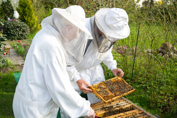 Two beekeepers maintaining bee hive