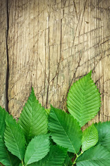Green leaves over vintage wood