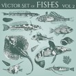 vintage illustrations of fishes & shells vol. 2