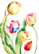 Quadro Beautiful tulips flowers