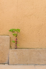Small plant grows from a crack between a tile and wall