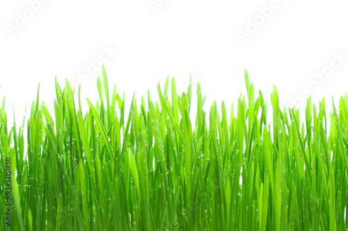 Grass - 52151850