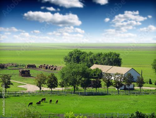 Leinwandbild Motiv Horses in the field