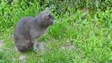 Tomcat in the garden poster
