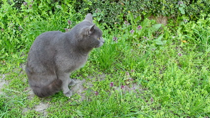 Tomcat in the garden