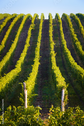 Vertical shot of central european vineyard