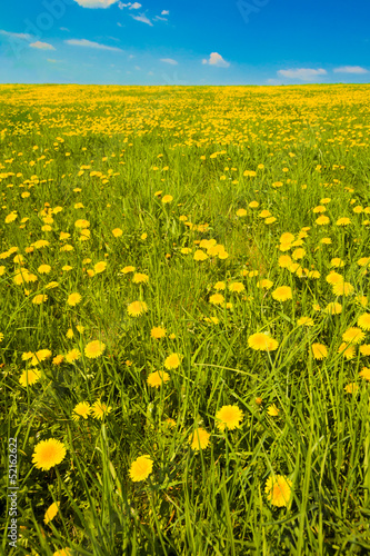 Tall shot of spring meadow with dandelions and sky