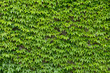 ivy wall background