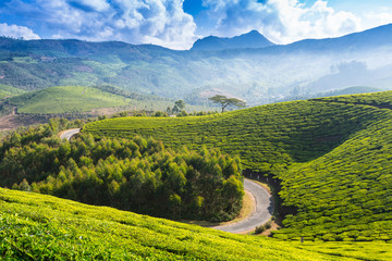 Road on a tea plantations