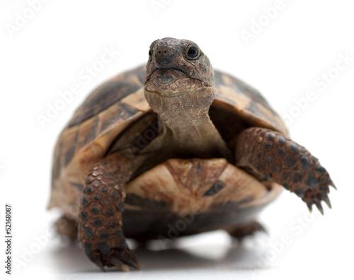 Foto op Aluminium Schildpad Turtle