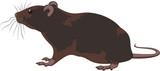 rat, rodent poster