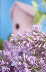 Birdhouse, lilac, spring, new home.