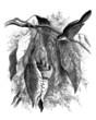 Bird's Nest : Warbler - Fauvette Couturière - Sylvia Sutoria