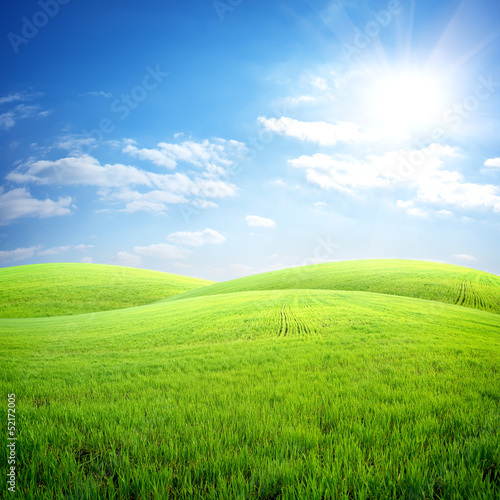 Field of fresh grass