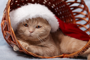 Cat wearing Santa's hat lying in a basket
