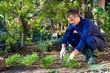Young man raking soil near parsley