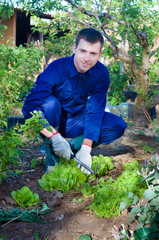 Young man raking soil near salad