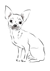 Toy Terrier. sketch