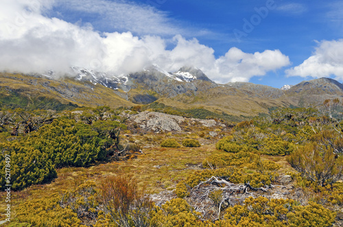 Alpine Vegetation below cloud shrouded peaks