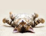 Fototapety cat