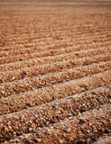 Furrows of a Plowed Field poster
