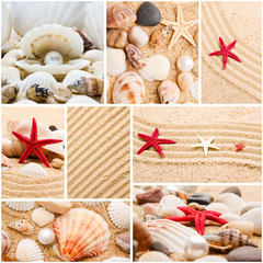 Collage of summer seashells. collection of seashells. pearl on t