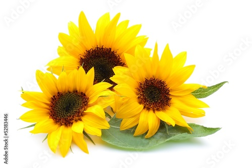 Fotobehang Zonnebloemen ヒマワリの花
