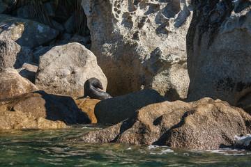 basking seal in Abel Tasman National Park