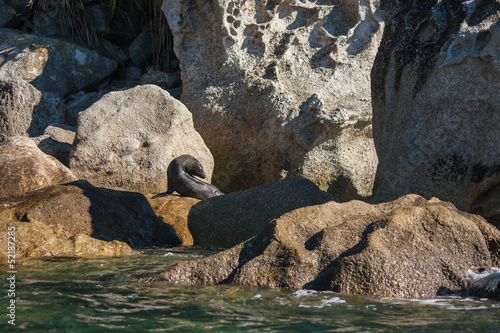 basking seal in Abel Tasman National Park